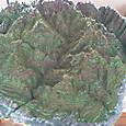 今日の屋久島模型